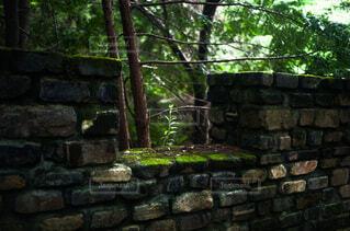 お散歩山登りしているとレンガの隙間から元気よく生えてる緑の写真・画像素材[4800361]