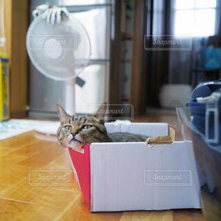 人見知りで怖がりな猫ちゃんでも暑さに耐えれず出てきたの写真・画像素材[4800357]