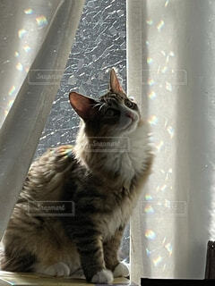 遠くの飼い主探すネコの写真・画像素材[4215355]