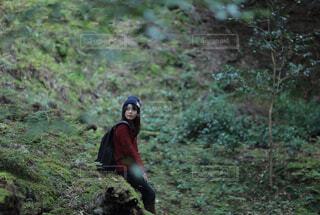 森の中の写真・画像素材[1539904]