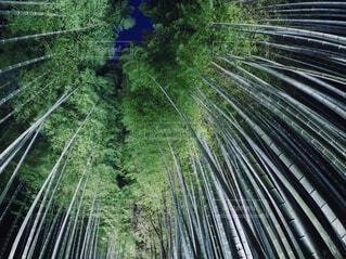 竹林の小怪の写真・画像素材[1580923]