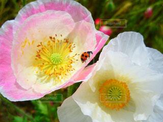 近くの花のアップの写真・画像素材[1542516]