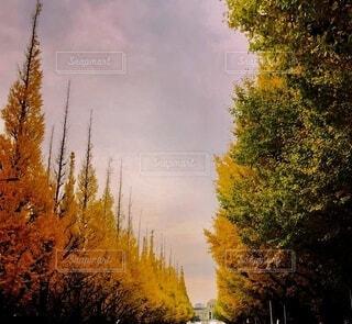 秋の写真・画像素材[4692233]