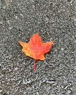 10月のカナダの写真・画像素材[1540914]