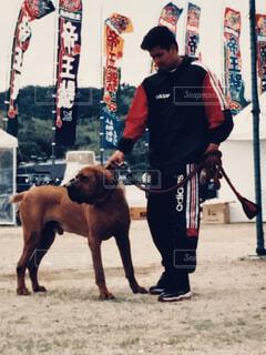 土佐闘犬と私 大会の写真・画像素材[1541525]