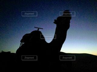 砂漠の夜のラクダの写真・画像素材[1541577]