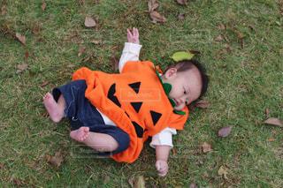 草に転がる赤ちゃんの写真・画像素材[1560657]