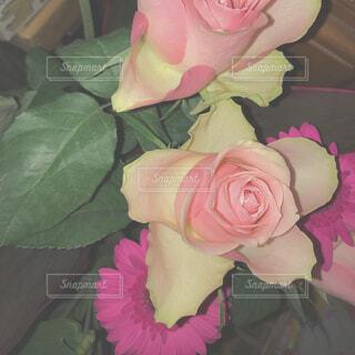植物にピンクの花の写真・画像素材[1544079]