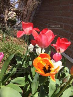 テーブルの上に花瓶の赤い花の写真・画像素材[1548272]
