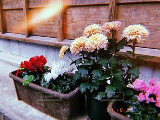 テーブルの上の花の花瓶の写真・画像素材[1548326]