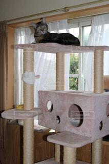 木製の椅子の上に座っている猫の写真・画像素材[1548381]