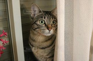 カメラにポーズを鏡の前で座っている猫の写真・画像素材[1549647]