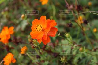 近くの花のアップの写真・画像素材[1553268]