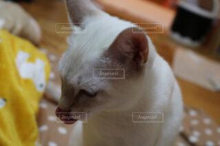 猫の写真・画像素材[1570724]