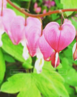 花のアップの写真・画像素材[1547834]