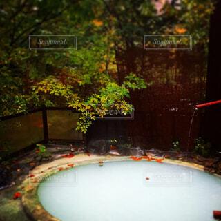 秋の露天風呂の写真・画像素材[1597462]