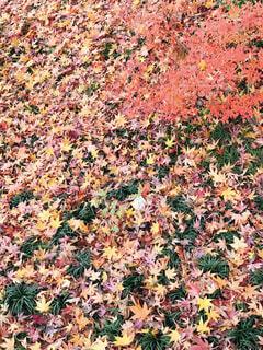 庭園のもみじの写真・画像素材[1551675]
