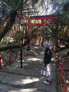 ヤシの木の横の通りを歩くの写真・画像素材[1548251]