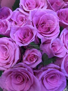 バラの花束の写真・画像素材[1542934]
