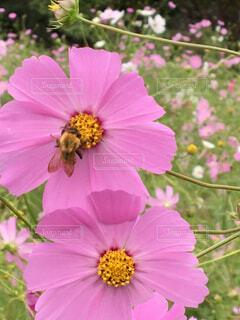 近くの花のアップの写真・画像素材[1549279]