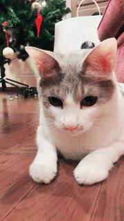 猫の写真・画像素材[1548818]