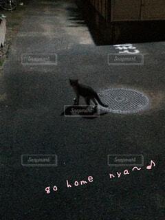 路上を歩く猫の写真・画像素材[1544546]