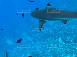水面下を泳ぐ魚たちの写真・画像素材[1545711]