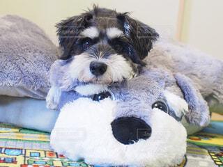 No.228006 犬