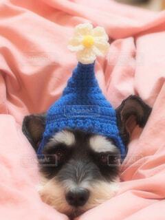 犬の写真・画像素材[277861]