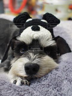 No.358877 犬