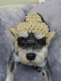 No.358879 犬
