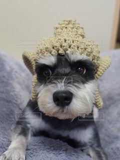 犬 - No.358881