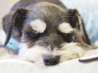 No.541627 犬
