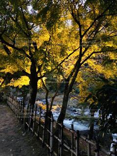 香嵐渓の写真・画像素材[1602472]