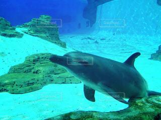 イルカの写真・画像素材[1607402]