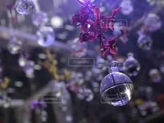 ガラスの花瓶と紫の花の写真・画像素材[1587556]