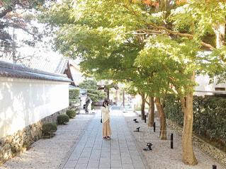 神社の緑の写真・画像素材[2748032]