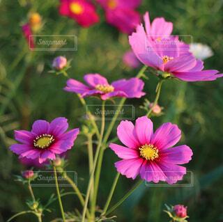 近くの花のアップの写真・画像素材[1559929]
