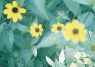 庭の花の写真・画像素材[1549476]
