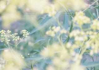 庭の花の写真・画像素材[1549537]