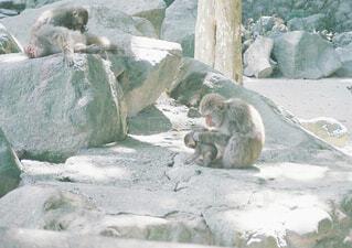 猿の親子の写真・画像素材[1549541]