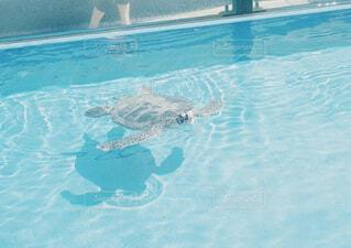 水族館のカメの写真・画像素材[1549545]