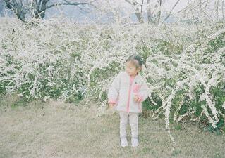 草の中に立っている少女の写真・画像素材[1551414]