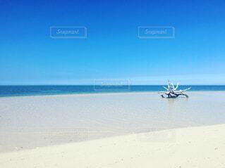 White sand beachの写真・画像素材[1550278]