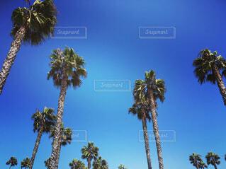 Palmtreesの写真・画像素材[1550284]