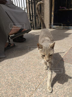 猫の写真・画像素材[1552541]