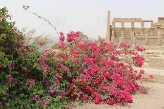 イシス神殿とキレイな花の写真・画像素材[1552602]