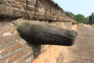 ワニの形をした排水口の写真・画像素材[1553886]