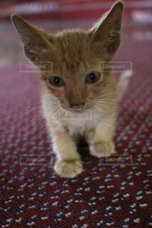 子猫の写真・画像素材[1553892]