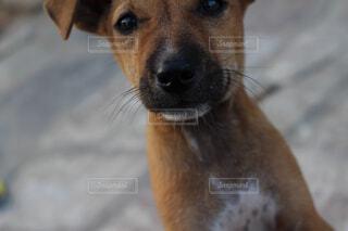 近寄ってきてくれた子犬の写真・画像素材[1554143]